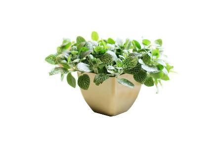 防辐射绿色植物